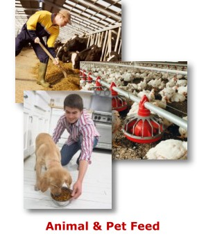 Animal & Pet Feed